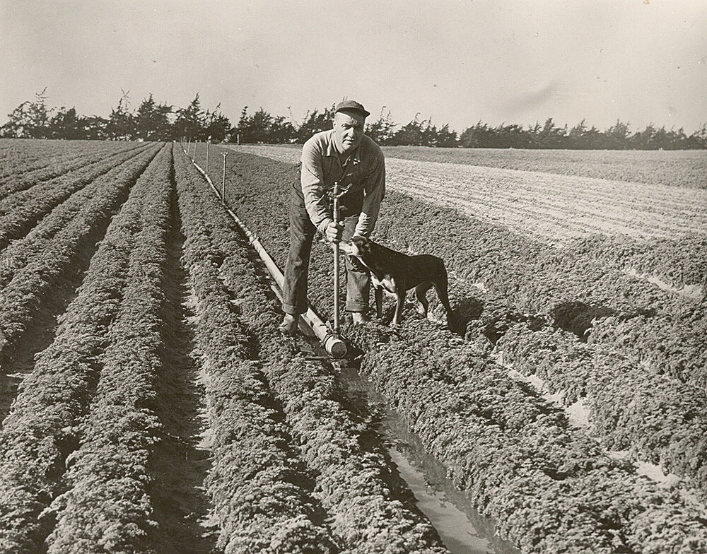 Frank Caporro adjusting a Rain Bird impact sprinkler in Watsonville, CA with his dog in a field