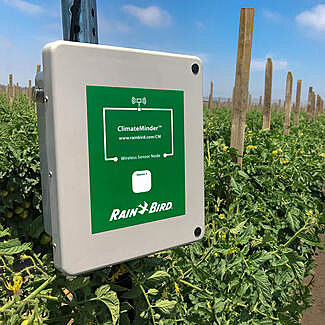 ClimateMinder  wireless sensor node in tomato crop