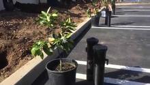 First Fruits Project - Rain Bird RWS Mini Root Watering System